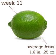 week11_size